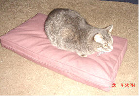 poly fill cat bed